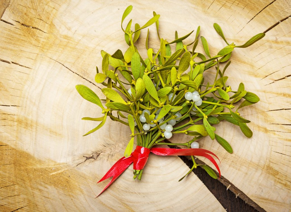Mistletoe with a red ribbon on a wooden background.