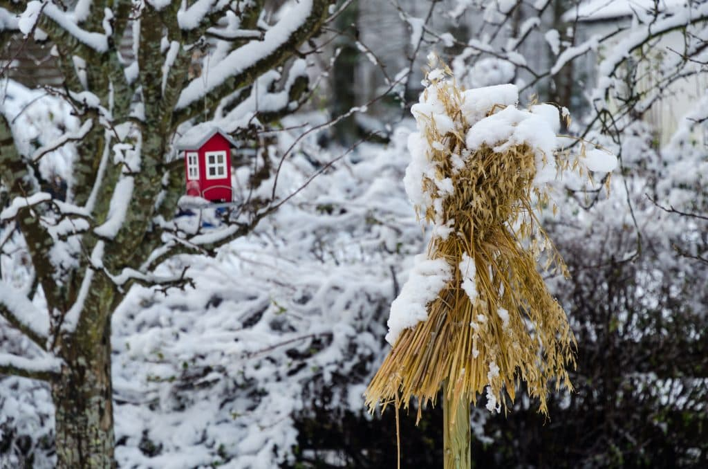 Traditional sheaf of oats and a bird feeder in a garden in wintertime.