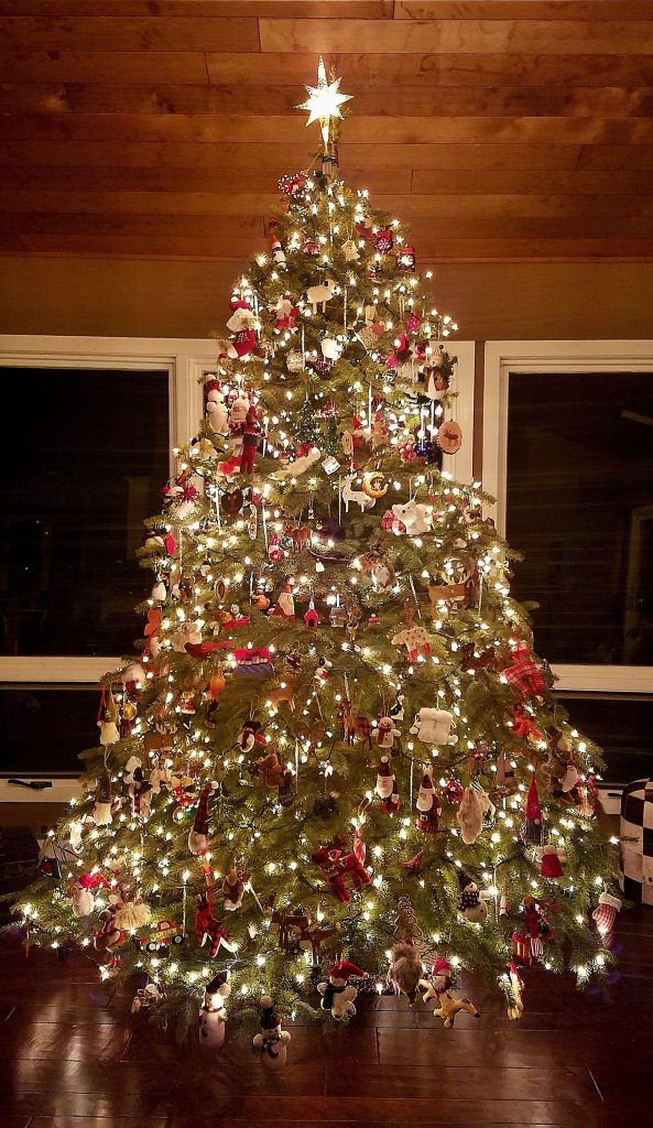 Tall rustic Christmas Tree Lit Up Indoors in the Evening.